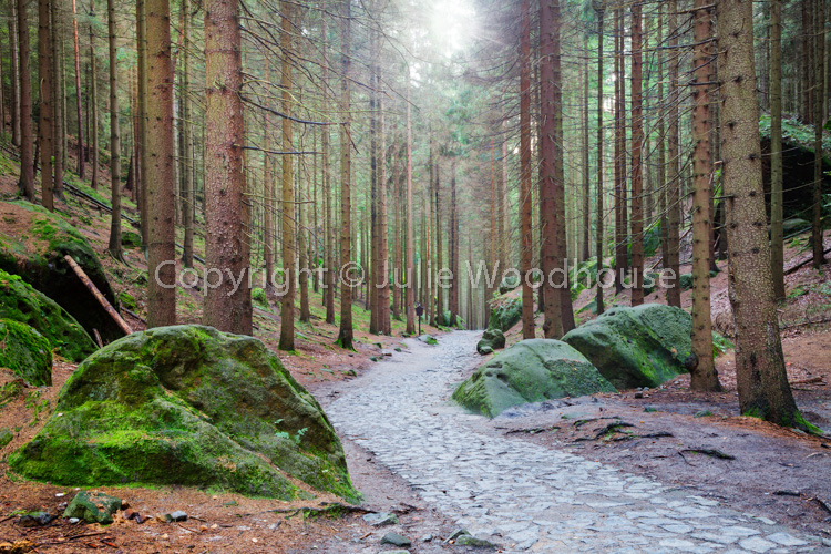 photo showing Path Through The Forest To Pravcicka Brana Pravcice Gate Natural Sandstone Arch, Hrensko, Usti Nad L