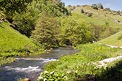 Dovedale Near Ashbourne, Derbyshire