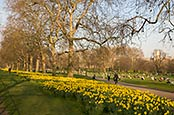 Thumbnail image of Green Park, London