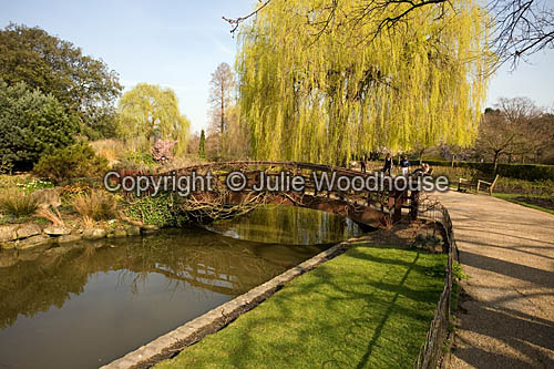 photo showing Queen Mary's Garden, Regents Park, London