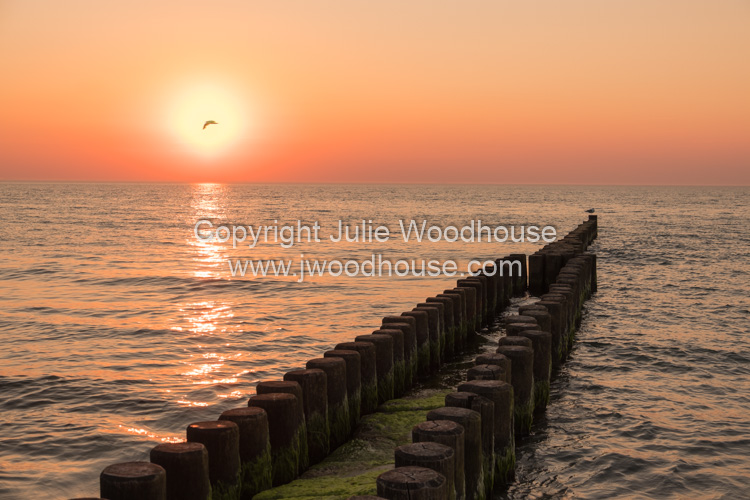photo showing Sea With Groynes At Sunset At Ahrenshoop, Mecklenburg-Vorpommern, Germany