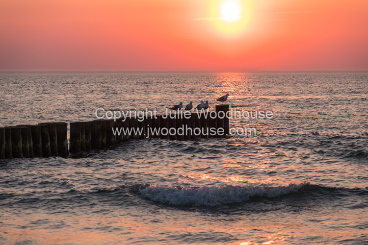 photo showing Sea With Groynes And Seagulls At Sunset At Ahrenshoop, Mecklenburg-Vorpommern, Germany