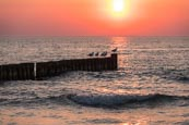 Thumbnail image of sea with groynes and seagulls at sunset at Ahrenshoop, Mecklenburg-Vorpommern, Germany