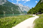 Thumbnail image of Footpath leading to the Salet landing stage on the Königssee Lake, Upper Bavaria, Bavaria, Germany,