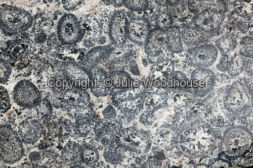 photo showing Orbicular Granite