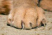 Cats Paw And Claws