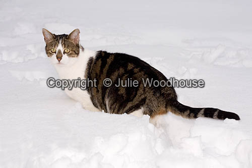 photo showing Cat In Snow