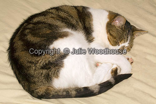 photo showing Cat Sleeping Curled Up